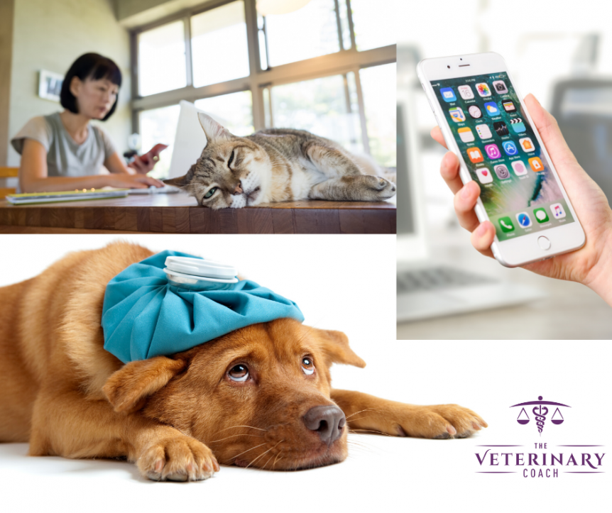 Treating pets through telemedicine