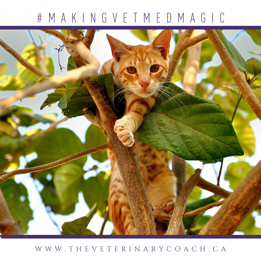 an orange tabby cat safe but stuck up in a tree with some sky in the background an lots of leaves